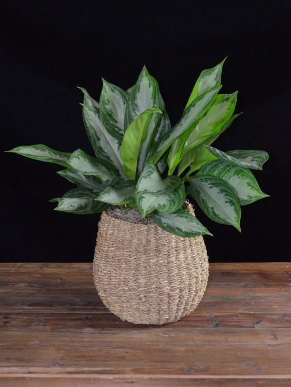 Plant #4