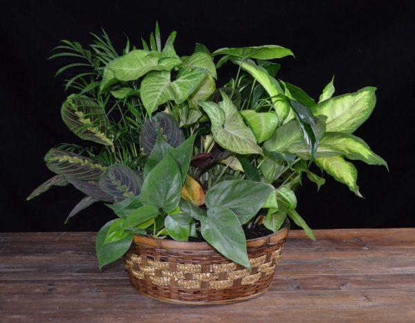 Plant #5