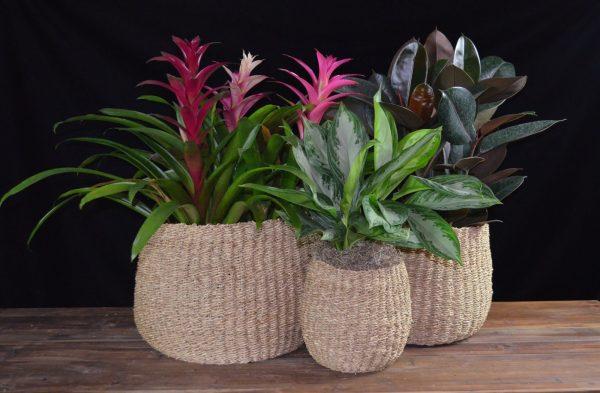 Plant #6